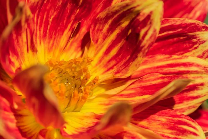 021317flower